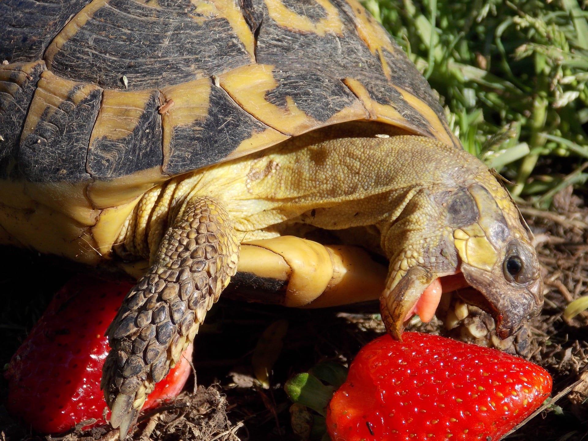 Turtle Position